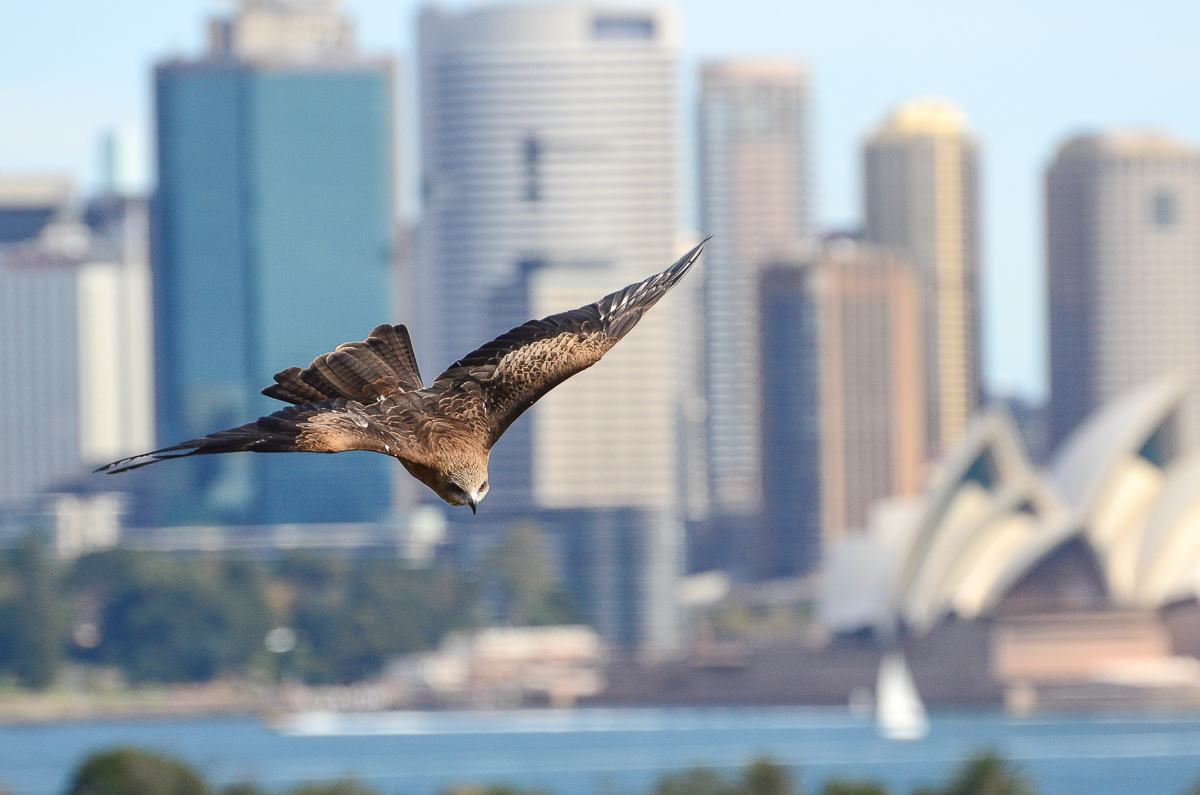 Wildlife photography course Taronga Zoo | Focus 10 | 4hrs