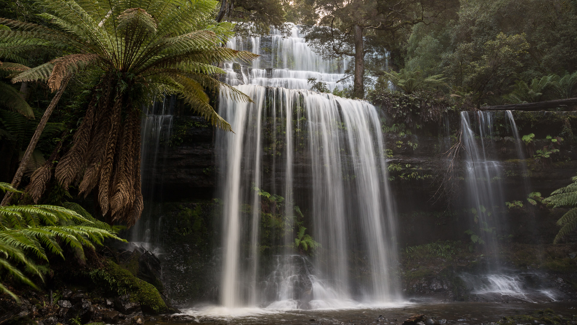 Mt Field National Park & Russell Falls - photo-oriented private day tour