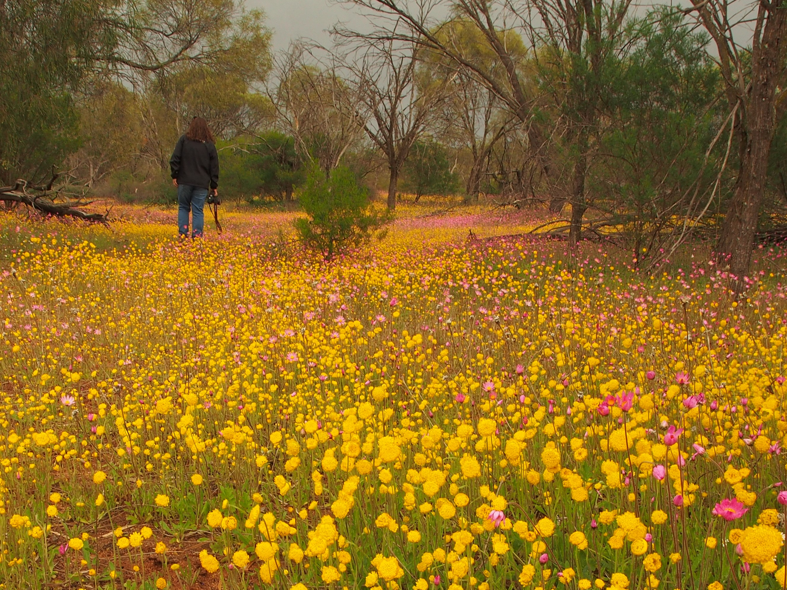 Amazing Wild Flowers of Western Australia 4 Day Tour