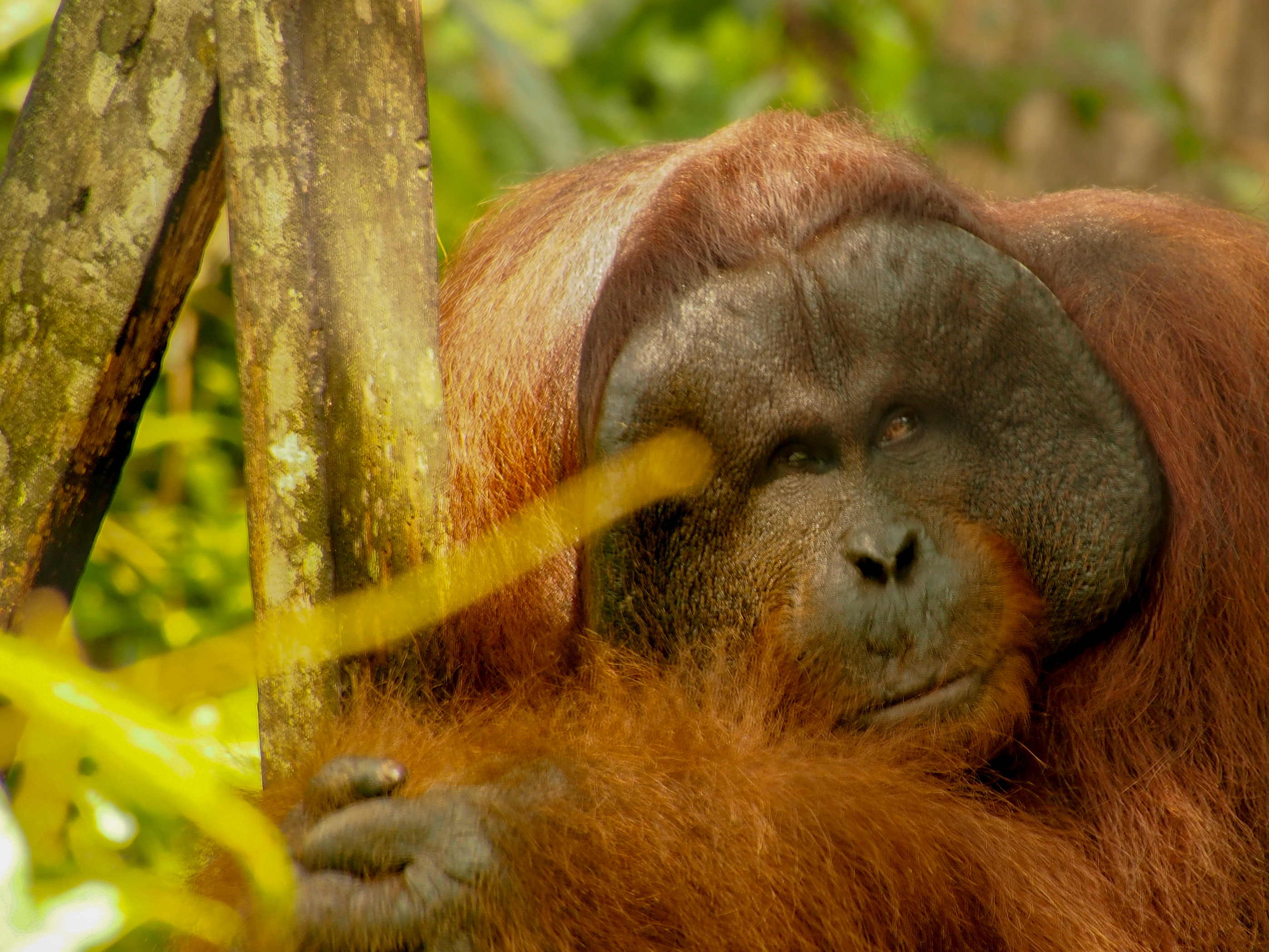 The Wilds of Borneo Photographic Tour